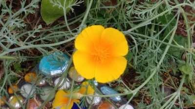 yellow flower close